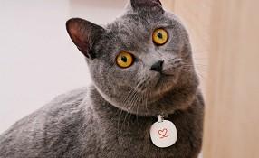 Pura – самая умная в мире поилка для котов